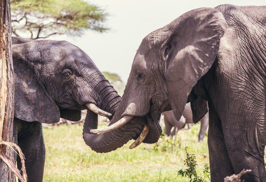 Luxusreisen Tansania